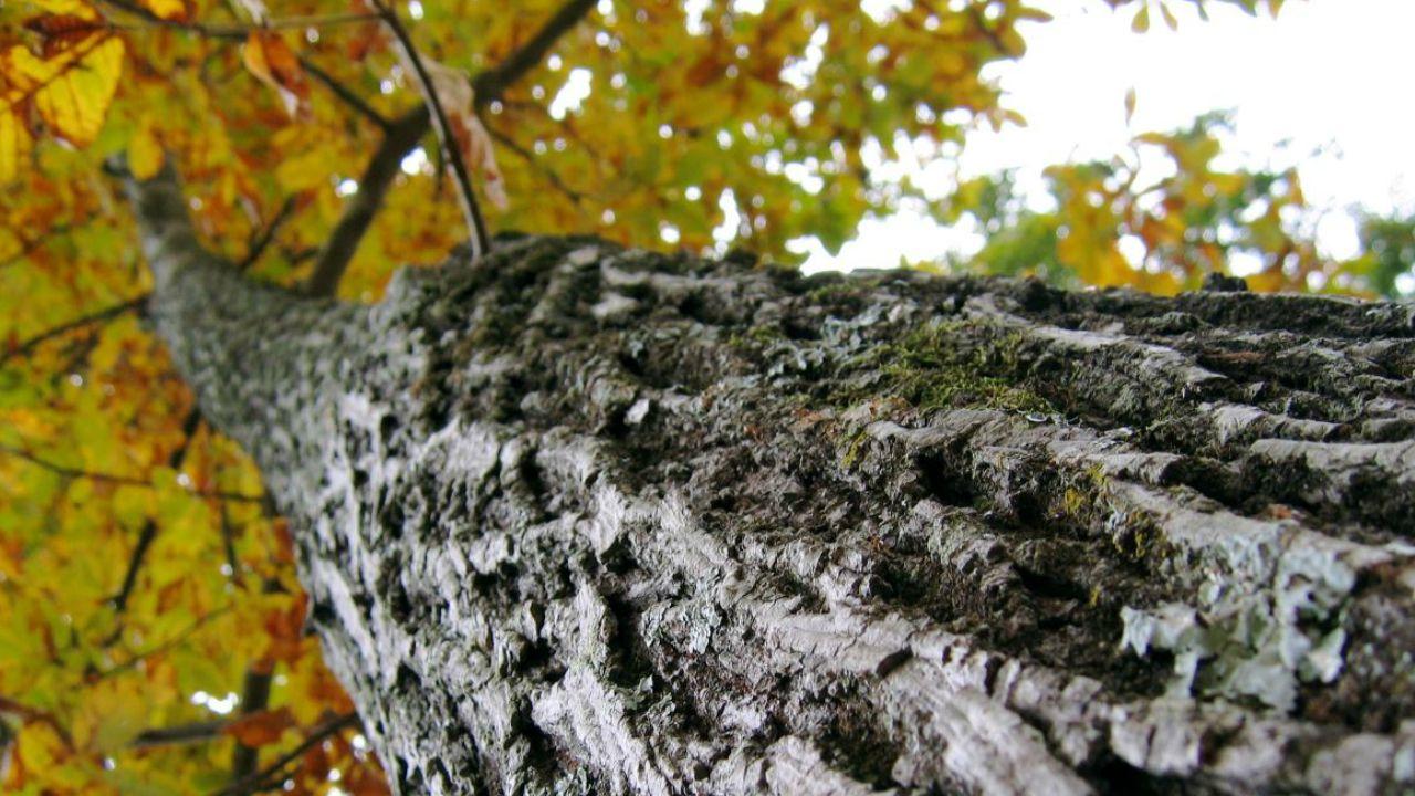 Snoeiwerkzaamheden aan bomen