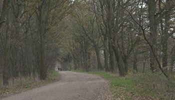 Verwarde man nog niet gevonden: politie nog steeds dringend op zoek