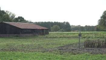 Provinciaal bomenplan krijgt vorm in Lottum